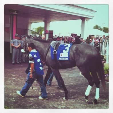 Derby day horse